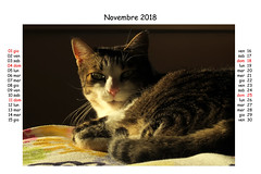 November 2018 (Alfredo Liverani) Tags: canong5x canon g5x pointandshoot point shoot ps flickrdigital flickr digital camera cameras europa europe italia italy italien italie emiliaromagna romagna faenza faventia faience animal kitten gatto gatta gatti gatte cat cats chats chat katze katzen gato gatos pet pets tabby furry kitty moggy moggies gattino animale ininterni animaledomestico aliceellen alice ellen calendario calendar kalender