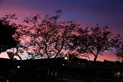 A Work Of Art Sunset - Santa Barbara California (Trail Trekker) Tags: californiasunset santabarbaracalifornia statestreet