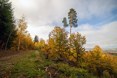DSC04985 (Olivier Rapin) Tags: sony alpha 7 samyang14mm foret automne couleurs suisse vaud broye payerne romandie