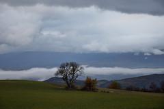 Fin de jour (RarOiseau) Tags: alpesdehauteprovence paysage nuage arbre v1500 montagne mountain cloud tree landscape