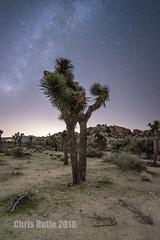 DSC04124 (montusurf) Tags: joshua tree national park desert palm springs california night time sky star stars milky way galaxy