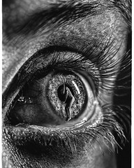 Hyperrealism Drawing Eye By Jono Dry (katalaynet) Tags: follow happy me fun photooftheday beautiful love friends