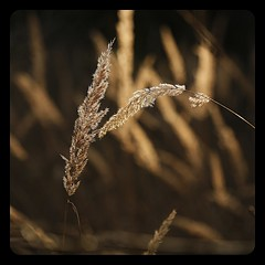 leave-taking (luci_smid) Tags: grass autumn impression