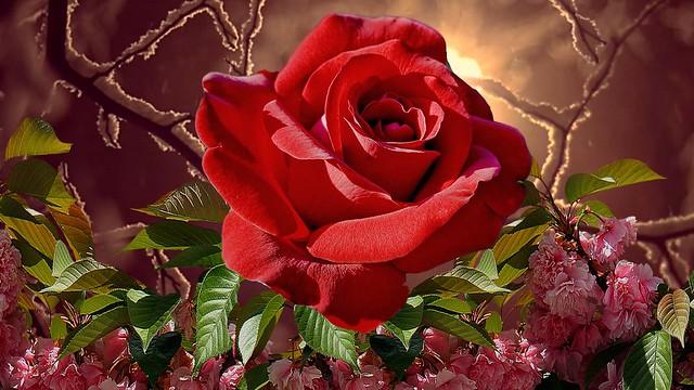 Обои осень, цветы, красота, РОза картинки на рабочий стол, раздел цветы - скачать