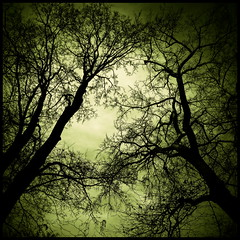 chord (luci_smid) Tags: trees branches shapes pattern ornament light treetops touches impression
