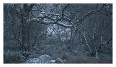 Carrog - January 18th (Edd Allen) Tags: mountain northwales wales clouds dinorwig landscape mountainscape atmosphere atmospheric sunrise nikond810 serene bucolic uk cwmorthin quarry slate snow lake ice reeds frozen nikkor70200mm carrog tree treescape blizzard