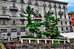 Small pine forest on the Naviglio Grande (Marco Trovò) Tags: marcotrovò hdr canong1x milano italia italy città city strada street edificio building naviglio waterway