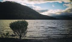 Transference (Keith Midson) Tags: tullah lakerosebery tasmania lake water tree bush shrub plant hill mountain westcoast sky canon 5d sigma 2470mm