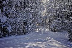 Schnee staubt herab (Helmut Reichelt) Tags: schneestaub waldweg verschneit wald schnee viel sonne winter februar schwaigwall oberbayern bavaria deutschland germany leica leicam typ240 captureone12 dxophotolab leicasummilux35mmf14asphii