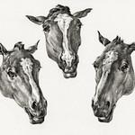 Three horse heads (1812) by Jean Bernard (1775-1883). Original from The Rijksmuseum. Digitally enhanced by rawpixel. thumbnail