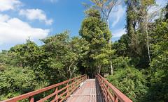 53446-Khao-Yai (xiquinhosilva) Tags: 2017 dongphayayen haewnarok hintung khaoyai mueangnakhonnayokdistrict nationalpark park thailand unescoworldheritage waterfall tambonnahinlat changwatnakhonnayok th