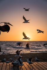 Final Sunset for 2018 (SemiXposed) Tags: st kilda melbourne australia sunset sand outdoors man