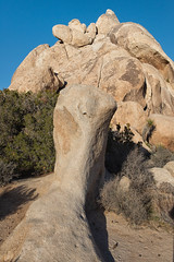 untitled (89 of 125).jpg (xen riggs) Tags: desert california joshuatreenationalpark february2018