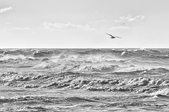 Seagulls and waves (jgokoepke) Tags: seagulls waves clouds wind northsea westerland sylt germany bw