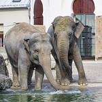 Two elephants at the shore thumbnail