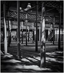 Lomography (Black and White Fine Art) Tags: lomography lomo debonair toycamera camaradejuguete plasticcamera camaradeplastico parqueluismuñozrivera sanjuan oldsanjuan viejosanjuan puertorico bn bw aristaedu100