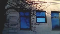 Library windows - HWW (Maenette1) Tags: library windows tree spiespubliclibrary menominee uppermichigan happywindowswednesday flicker365 allthingsmichigan absolutemichigan projectmichigan michiganlibraries