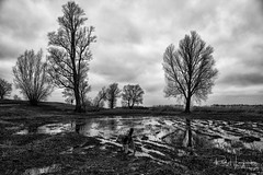 Flooded land (PaulHoo) Tags: blackandwhite 2018 storm sky nikon d700 flooded cloudporn landscape land tree dog pet animal