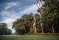 Saw a dead tree, beautifully (Ingeborg Ruyken) Tags: 2018 autumn october woods berlicum fall flickr herfst ochtend morning wamberg forest oktober natuurfotografie instagram 500pxs shertogenbosch bos