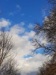Nuages et arbres en contreplongée (thème de janvier) (Marie-Hélène Cingal) Tags: cagnotte landes 40 ciel sky clouds nuages