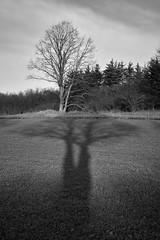 One, Two, Tree (richard.kralicek.wien) Tags: blackandwhite winter landscape austria tree