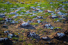 Norddeutsches Hügelland (Doblinus) Tags: schleswigholstein oeversee zhongyilensturboii minolta minolta3570mmf35 andertreene germany maulwurfshügel maulwurf fotowalk treene manuellesobjektiv altesobjektiv