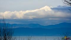A-LUR_3122 (OrNeSsInA) Tags: taly passignano panicale natura panorami campagma campagna landescape trasimeno nikon canon airone airon cormorano spettacolo birdwatching albero cielo animale mare acqua uccello