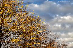 Diagonal Autumn (Pieter Musterd) Tags: autumn herfst plein pietermusterd musterd canon pmusterdziggonl nederland holland nl canon5dmarkii canon5d denhaag 'sgravenhage thehague lahaye