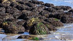 20150830_bowling_ball_beach_024 (petamini_pix) Tags: mendocinocounty california bowlingballbeach schoonergulch beach rocks nearfar rock sand sea coast shore water ocean seaside seaweed