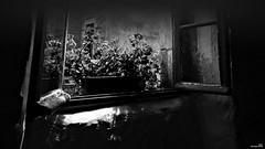 Les reflets de la jardinière. (Un jour en France) Tags: monochrome fenêtre jardinière contrejour black noiretblancfrance noiretblanc canonef1635mmf28liiusm canoneos6dmarkii reflet