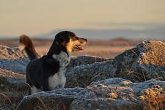24-november-kotlugengi-rockville_063 (Stefán H. Kristinsson) Tags: venus kötlugengið nikond800 nikon70200f4 reykjanes winter november 2018 iceland vetur sunset red dog dogs hundur hundar