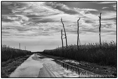 Elliott Island Road at low tide after rain. (Working Image Photography) Tags: road easternshore dorchestercounty rain puddles elliottisland maryland fujifilm xt20 blackandwhite bw