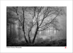 Lightfall (Chalky666) Tags: tree trees wood woodland forest fog mist southdowns westsussex landscape art mono