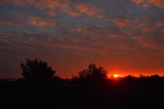 Sunrise Aekingerzand 3 (Alex Borst) Tags: nederland netherlands friesland aekingerzand sunrise zonsopkomst zon sun lucht sky ochtend morning heide drentsfriese wold
