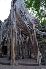 IMGP1015 Roots (Claudio e Lucia Images around the world) Tags: tapromtemple angkorwat cambodia ta prom temple angkor wat nature revenge siem reap cambogia tempio khmer ancient asceta pentax pentaxart tree roots ficus tomb rider lara croft pentaxkp pentax18135 pentaxlens statue