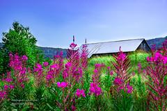 Illusion champêtre (Normand Lafrenière) Tags: kamouraska nikond500 campagne country champs field nature paysage landscape ferme farm grange barn
