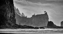 Low tide reverie (D. Inscho) Tags: lapush washingtoncoast water washington pacificnorthwest baldeagle silhouette seastack pacific beach wintersolstice