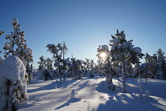 (Camusi) Tags: neige snow white blanc trees arbres conifères outdoor hiver winter sonyalpha7iii light lumière atthecabin cabin chalet canada territoiresdunordouest tno northwestterritories northof60 nord north nwt