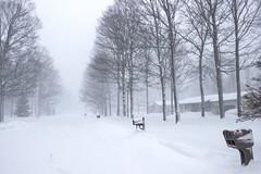 Snowy Crestwood (Scottb211) Tags: gaylord gaylordmi northernmichigan upnorth winter polarvortex