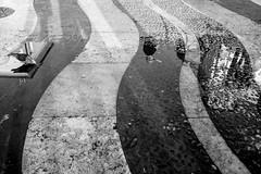 Pigeon - Lago di Garda (N°rdlicht) Tags: xpro2 lago taube kontrast lake pigeon garda street weiss schwarz fuji black italien italy people gardasee white