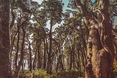 Parque Oncol, Curiñanco (instagram.com/leandroide_m) Tags: curiñanco chile parque oncol sur de reserva chilena south forest