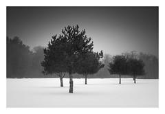 Five (bprice0715) Tags: canon canoneos5dmarkiii canon5dmarkiii landscape landscapephotography nature naturephotography beautiful beauty beautyinnature blackandwhite bw blackwhite monochrome mono highcontrast moody winter cold frigid fineart snow snowylandscape snowing trees
