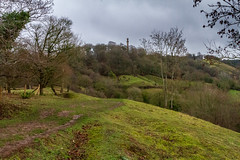 Peak Hill-1-16 (Sheptonian) Tags: somerset rural scenic landscape trees fauna grassland