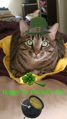 CJ St. Patrick Day (nymichaelg62) Tags: catmoments pet happy birthday st patrick