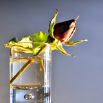 Juste une petite rose... thumbnail