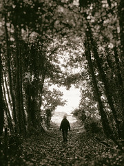 Tunnel Vision (Feldore) Tags: strangford tunnel avenue bright light woman walking alone ethereal feldore mchugh northern ireland irish olympus 1240mm sepia