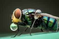 ARTP1004 (Et-Lin) Tags: fly bubble nature marco color