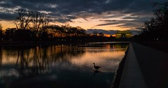 Sunset at the Reflecting Pool (Beau Finley) Tags: sunset dusk dc washingtondc beaufinley districtofcolumbia reflectingpool nationalmall lincolnmemorial canadagoose goose water sky