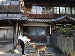Kokoro no komotta (bruno carreras) Tags: japon japan nippon isla island miyajima isukushima pagoda templo temple torii senjokaku hatsukaichi miyajimacho ciervo deer shika sol sun sunsen aterdecer puerto budismo budist