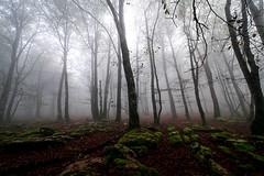 pagoa laiñotsu (juan luis olaeta) Tags: paisajes landscape natura fog nieblas laiñoa forest bosque basoa pagoa